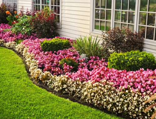 Apply Fertilizer in the Spring to Strengthen Roots and Promote Growth