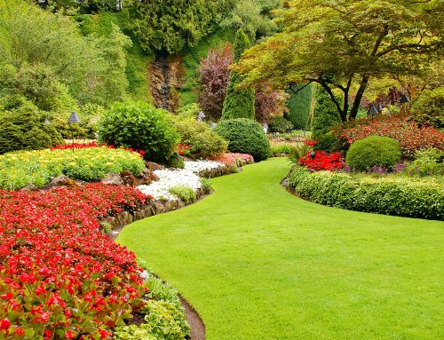 Leaf Removal is Key to a Healthy Lawn