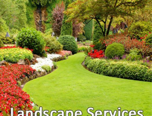 Do's and Don'ts of Summer Landscaping