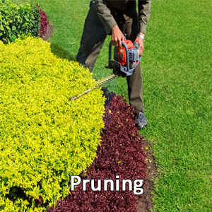 Shrub Pruning, Commercial Lawn Care
