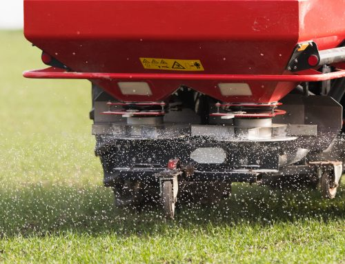 Applying Fertilizer in the Spring Can Strengthen Roots and Promote Growth
