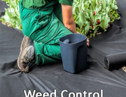 Spring is the Time For Pre-Emergent For Weed Control