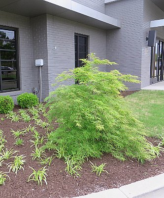 Office landscaping Apartment Click Here To Learn More About Our Services For Retail Shopping Centers And Office Complexes Wikimedia Commons Retail Office Pughs Earthworks Landscaping Lawn Maintenance