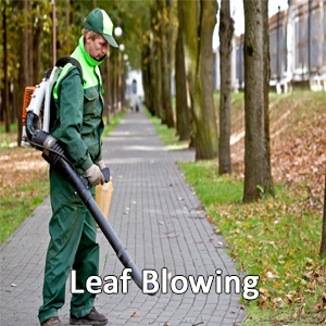 Keep Leaves Off Lawns, Sidewalks, and Parking Areas