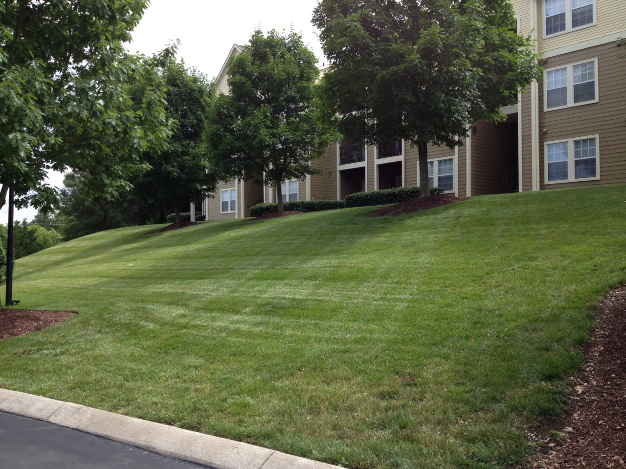 Lawns Need to Be Watered Regularly in the Summer