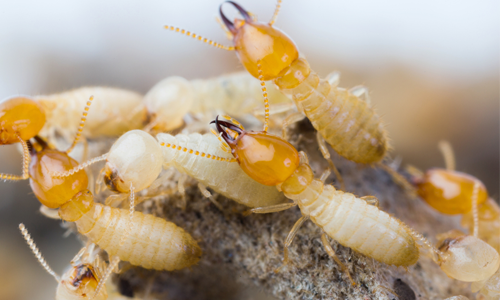 Pugh's Earthworks Creates New Division To Handle Pest Control Issues For Commercial Clients