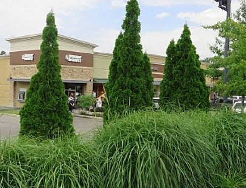 Landscaping & Lawn Maintenance For Retail Shopping Centers