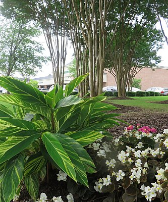 Heat-Tolerant Plants For the Summer