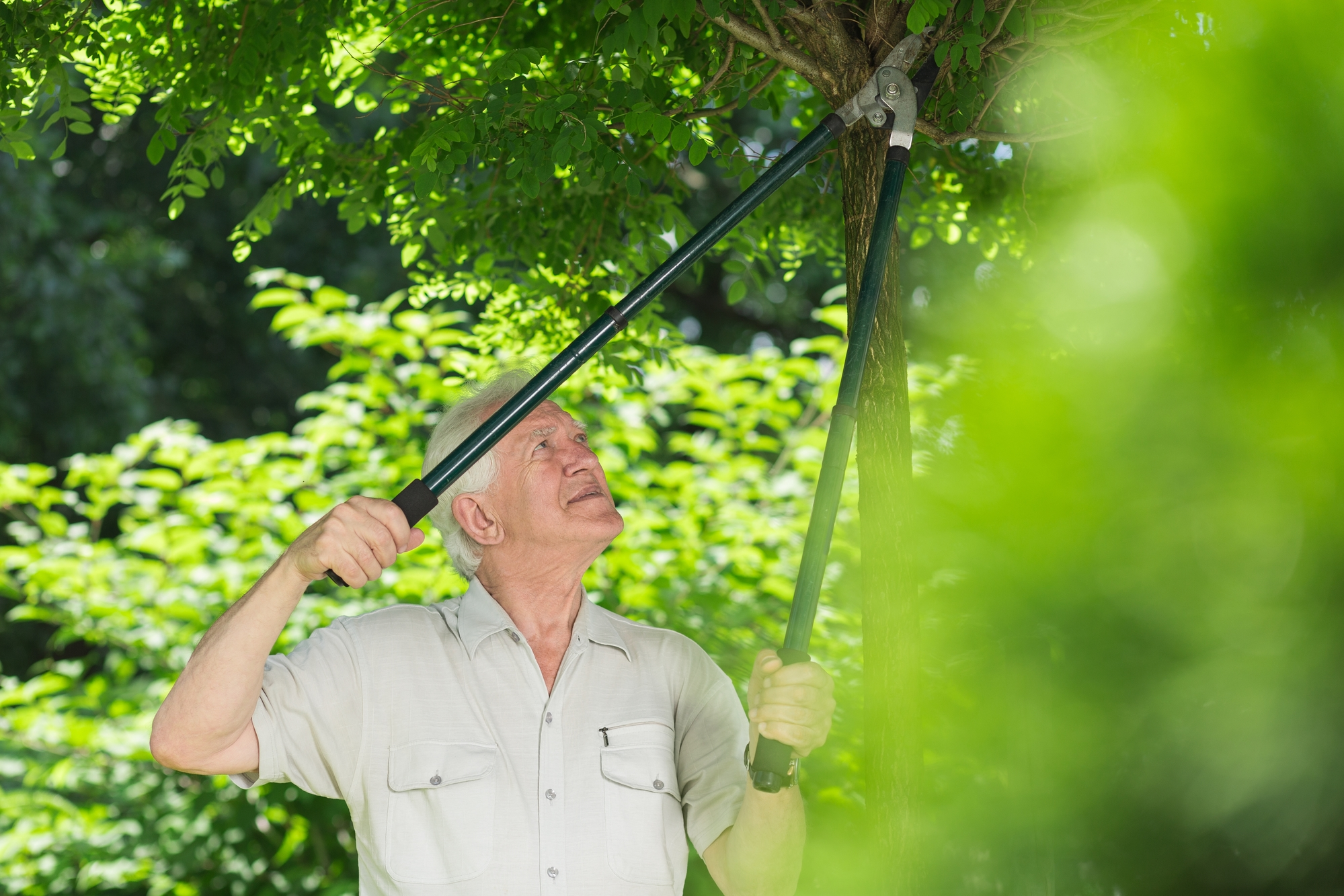 Trim Your Limbs For Healthier Trees