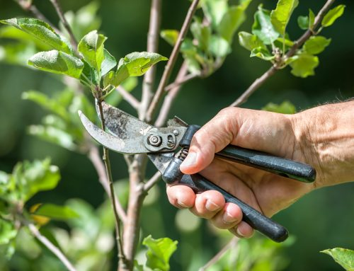 Mowing and Pruning Recommendations For Optimal Lawn and Plant Health