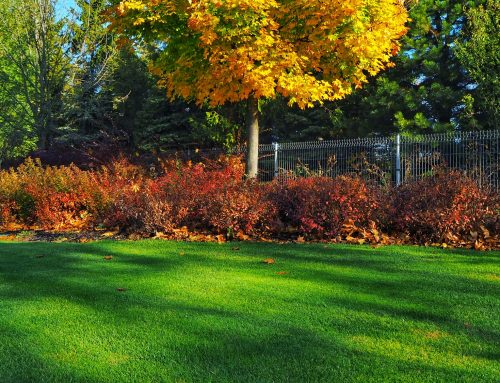Pugh's Earthworks has the experience to start preparation for your fall grass and landscape