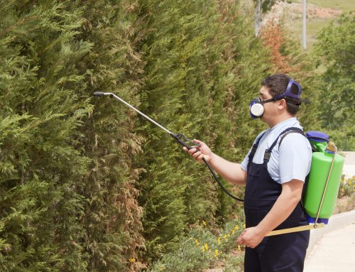 Pugh's Earthworks has the experience to control lawn and shrub insect damage