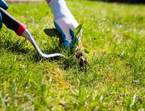 Pugh's Earthworks has the training to keep your commercial property free from unsightly weeds