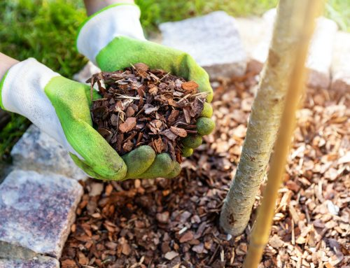 Pugh's Earthworks recommends proper spreading of mulch for winter plant protection